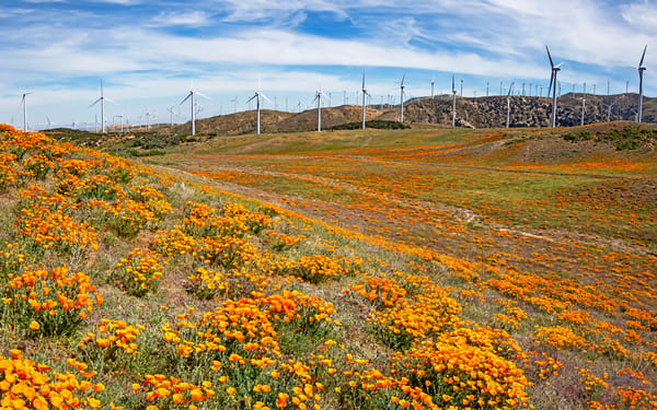 Windy Valley Poppyscape Photography Art | Josh Kimball Photography