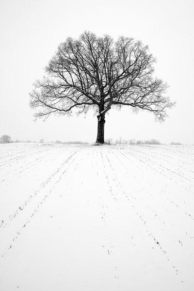 Berks County Oak II - Michael Sandy Photography