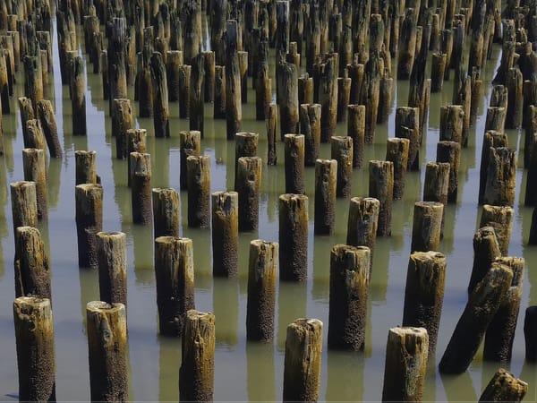 Hudson River Sentinels - Color