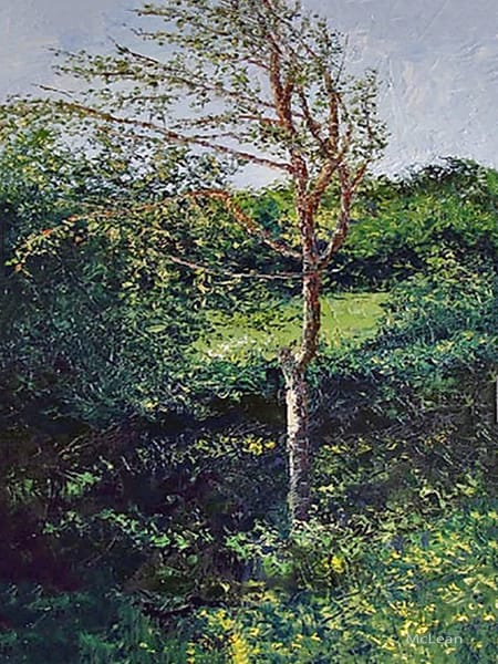 Poplar Tree, From an Original Oil Painting