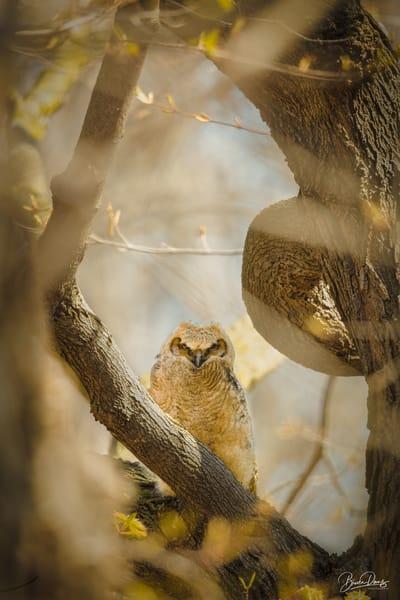 Into The Wild Photography Art | brucedanz