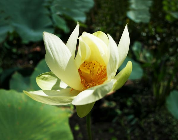 Heart Of Lotus Photography Art | It's Your World - Enjoy!
