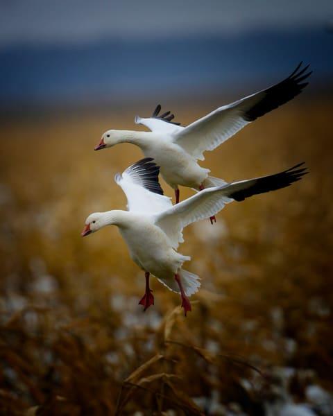 Touchdown Photography Art | Jim E Johnson Photography