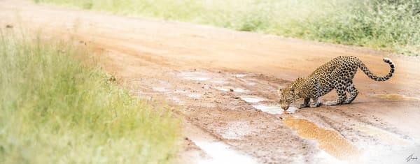 Fine Art Photography Print - Wild Reflection Leopard