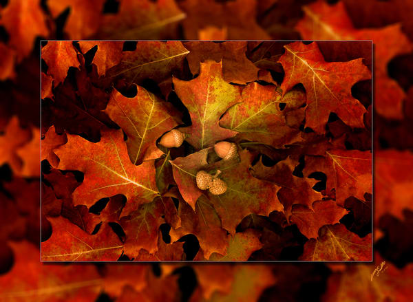 Leaves Oak 3 D Photography Art | Whispering Impressions