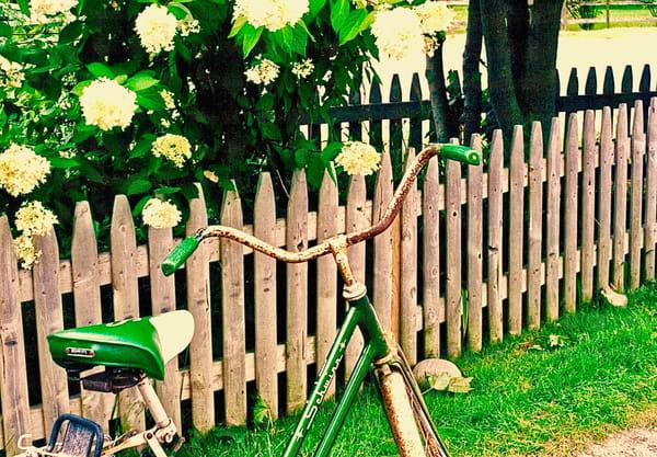 Lady's Bicycle Art | Wild Ponies creations