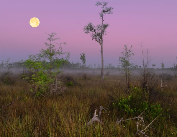 Florida's Scenic Wilderness 2021 Calendar | Constance Mier Photography
