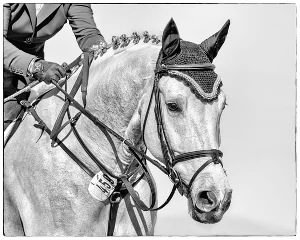 Bridle Portrait Of Contuz, B&W Photography Art | Carol Brooks Parker Fine Art Photography