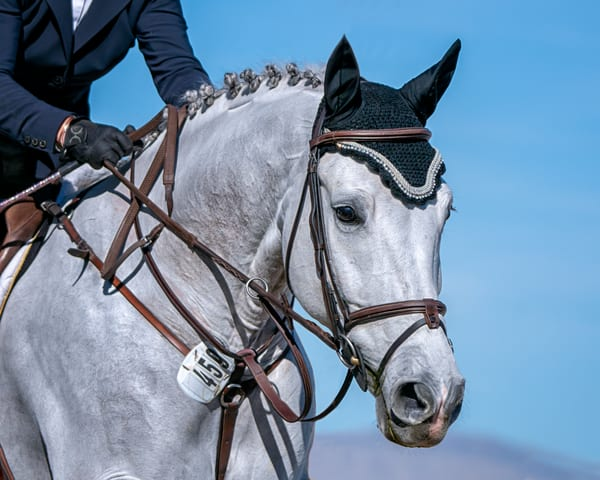 Bridle Portrait Of Contuz Photography Art | Carol Brooks Parker Fine Art Photography