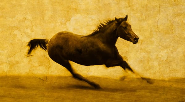 Caballo Salvaje   Limited Edition Print Photography Art | Doug Landreth Photography