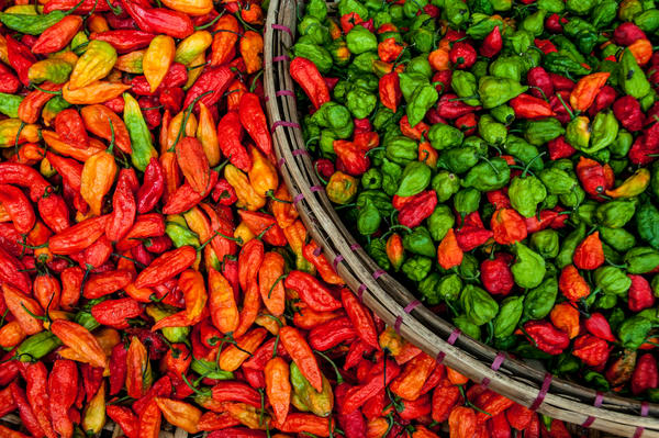 Chillies myanmar