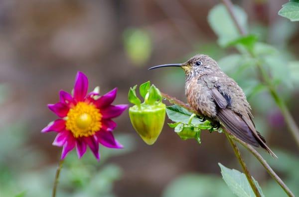 Hummingbird by flower