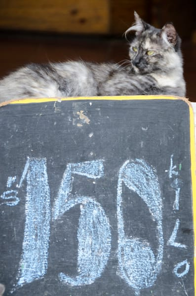 Market cat