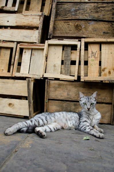 Crates cat