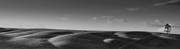 Garyhorsfall solitary tree photography mdyjhl r4vmbm