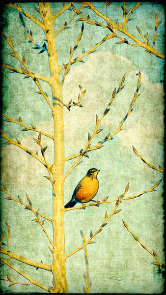 Ode To Spring   Limited Edition Prints Photography Art | Doug Landreth Photography