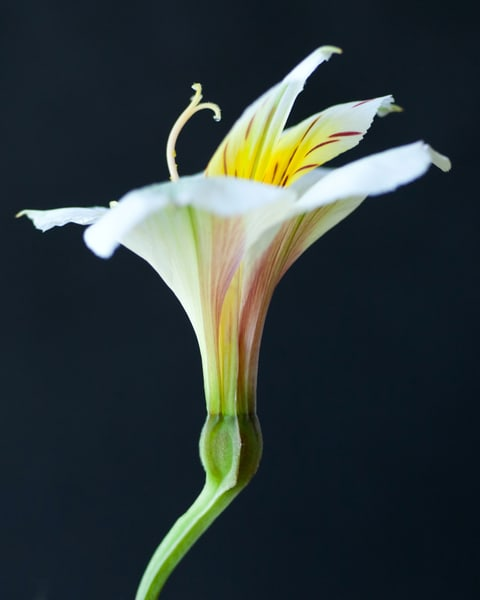 Botanical 23 Photography Art   MPF Gallery