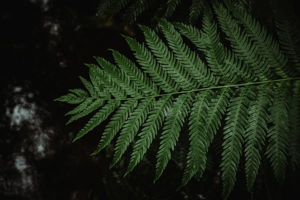 Fern over water