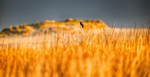 Long Point Red Winged Blackbird Spring Photography Art | Michael Blanchard Inspirational Photography - Crossroads Gallery
