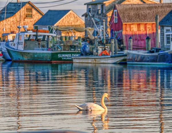 Menemsha Swan Photography Art | Michael Blanchard Inspirational Photography - Crossroads Gallery