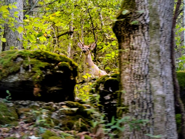 Abstract Deer Photography Art | N2 the Woods Photography - Nature and Wildlife Artwork