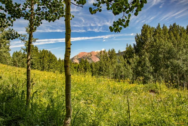 Aspen Mountains  6818 C S19  Photography Art | Koral Martin Healthcare Art