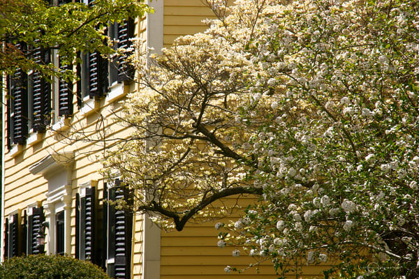 Spring Colonial Art | Fred Marco Photography
