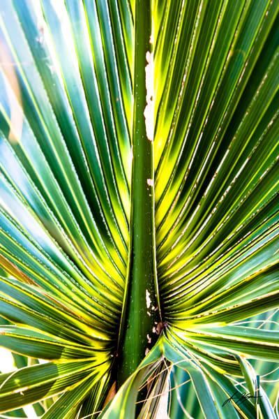 Palm Frond Art   Hogan's Harbor Art Gallery