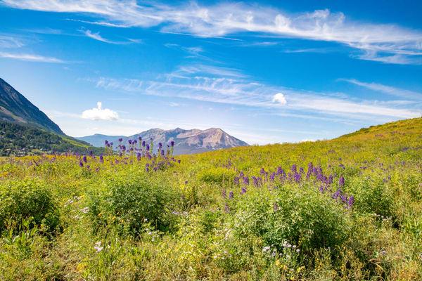Purple Wildflowers Mountain6738   Photography Art | Koral Martin Healthcare Art