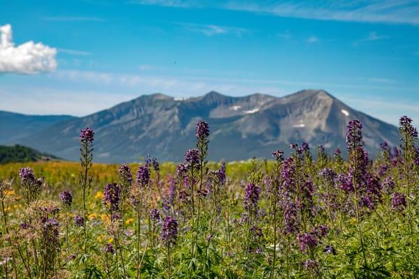 Purple Wildflowers Dre6737   Photography Art | Koral Martin Healthcare Art