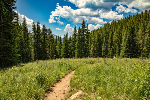 Snodgrass Trail Mountains 7020   Photography Art | Koral Martin Healthcare Art