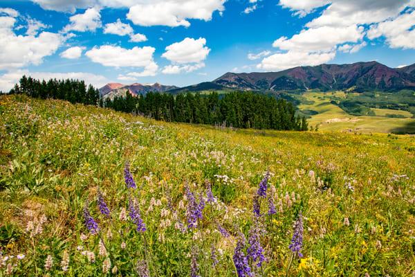 Snodgrass Trail Flowers Mountains 7111   Photography Art | Koral Martin Healthcare Art