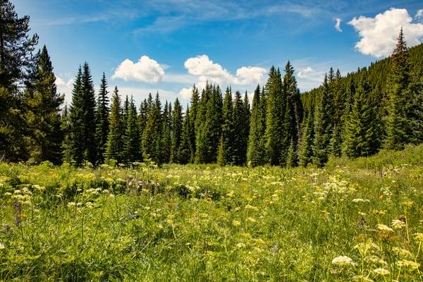 Snodgrass Trail Wildflowers 6886 C   Photography Art | Koral Martin Healthcare Art