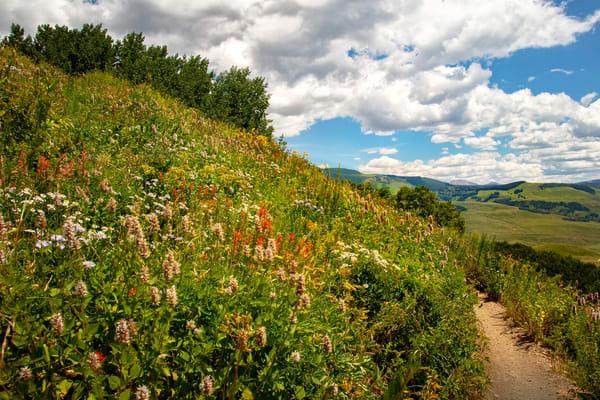 Snodgrass Trail Wildflowers Mountains 7061 G   Photography Art | Koral Martin Healthcare Art