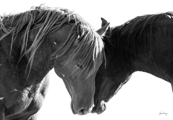 Silent Whispers Bw Photography Art | Koru Photo Designs