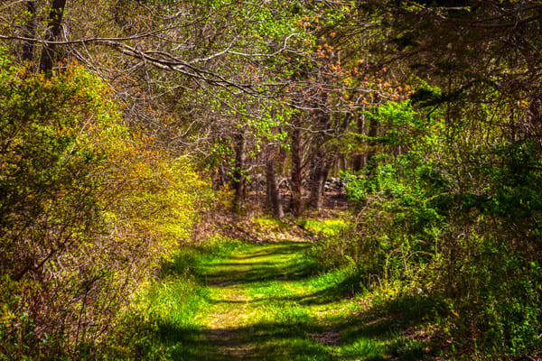 Narragansett Woodsy Spring Walk by Keith R Wahl, Made From RI Gallery