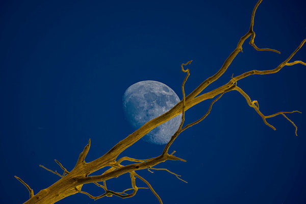Waxing Moon with Branch