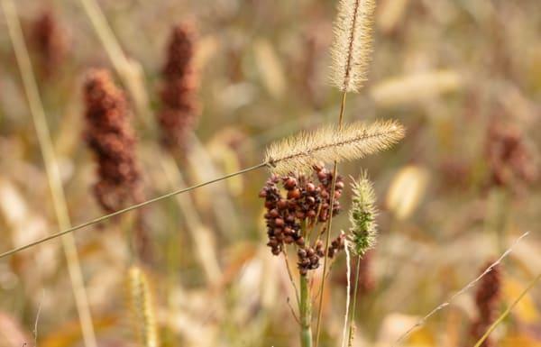 Grasses 0733   Photography Art | Koral Martin Healthcare Art