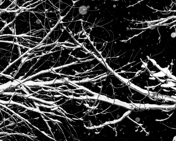 Winter Branches II by Jeremy Simonson