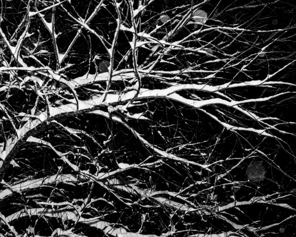 Winter Branches III by Jeremy Simonson