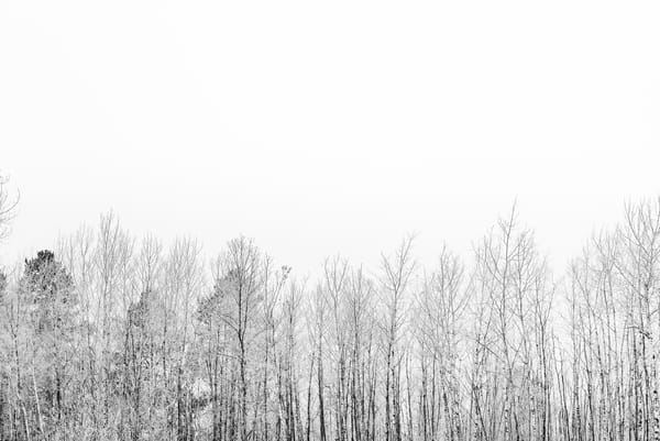 Frost Line  in black and white by Jeremy Simonson