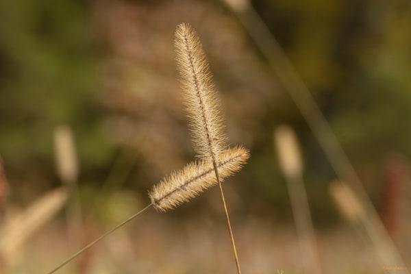 Grasses 0746   Photography Art | Koral Martin Healthcare Art