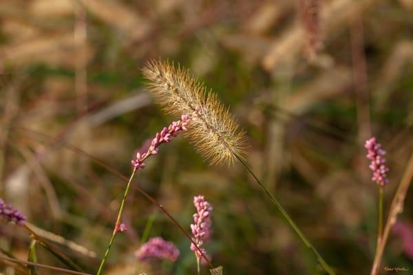 Grasses 0763   Photography Art | Koral Martin Healthcare Art
