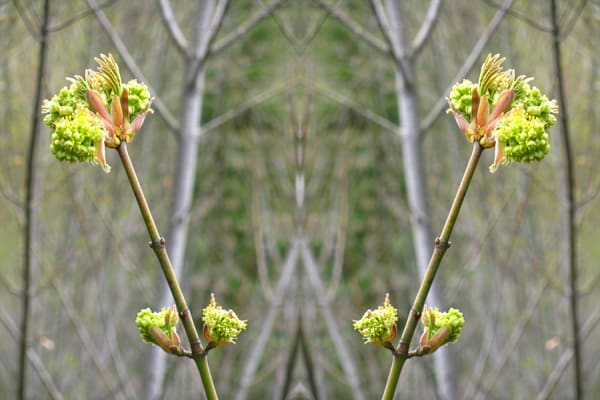 Mirror 053_Spirit Of Spring