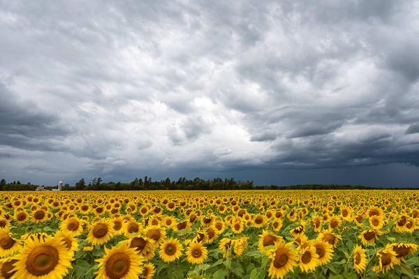 Sunshine when it Rains