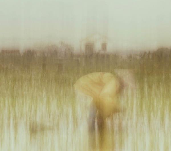 My Rice Paddy Art | Danny Johananoff