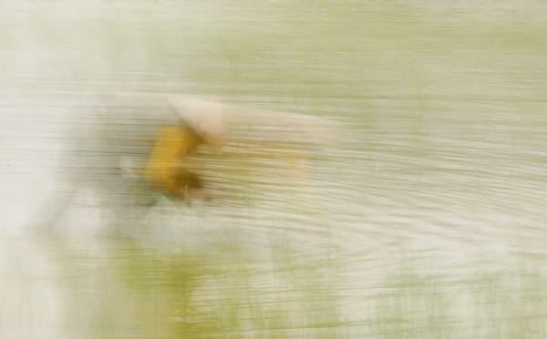 Rice Season Art | Danny Johananoff