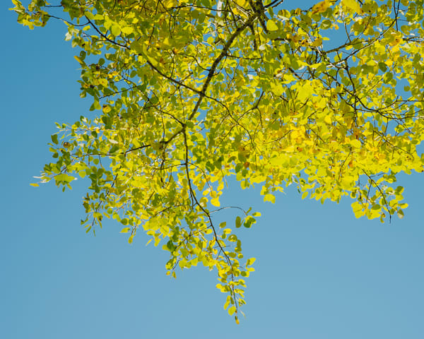 Yellow Blue II