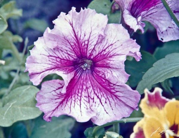 A flower from a garden