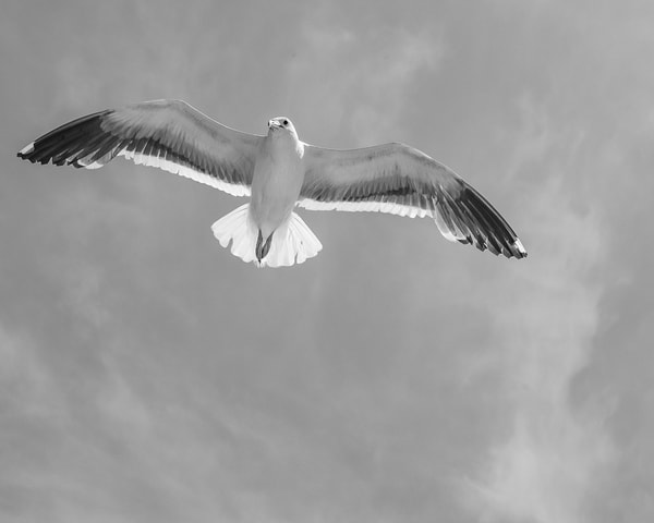 Watching from above in black and white - art print - Tamea